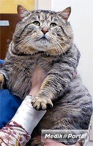 Диабет косит английских котов