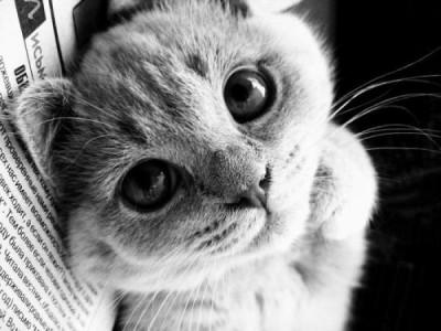 Профессиональные снимки кошек (17 фотографий)