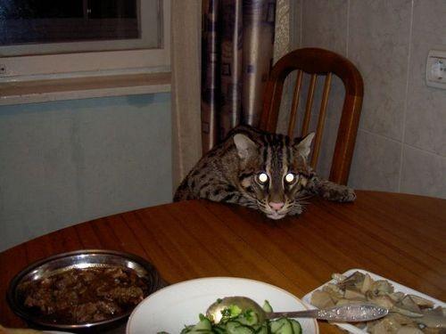 Виверровый кот-рыболов (47 фото)