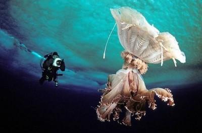 Фото (подводные) Северных морей