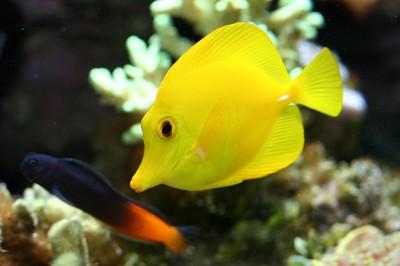 Фото морских аквариумов!