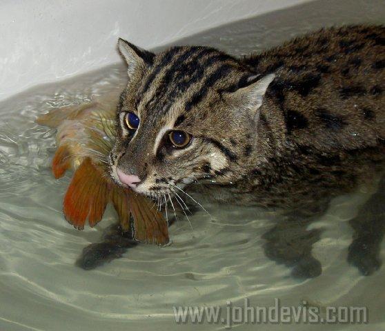 рыбак мой котик когда вышла