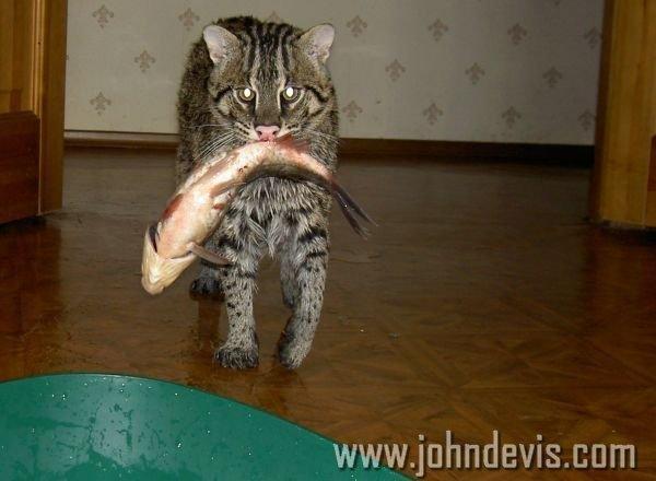 кот рыболов сюжет
