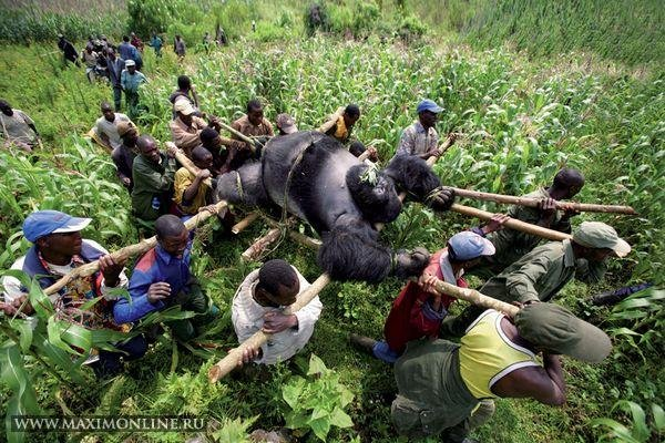 Что такое хорошо, а что такое Конго?