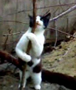 Кошка - стриптизёрша