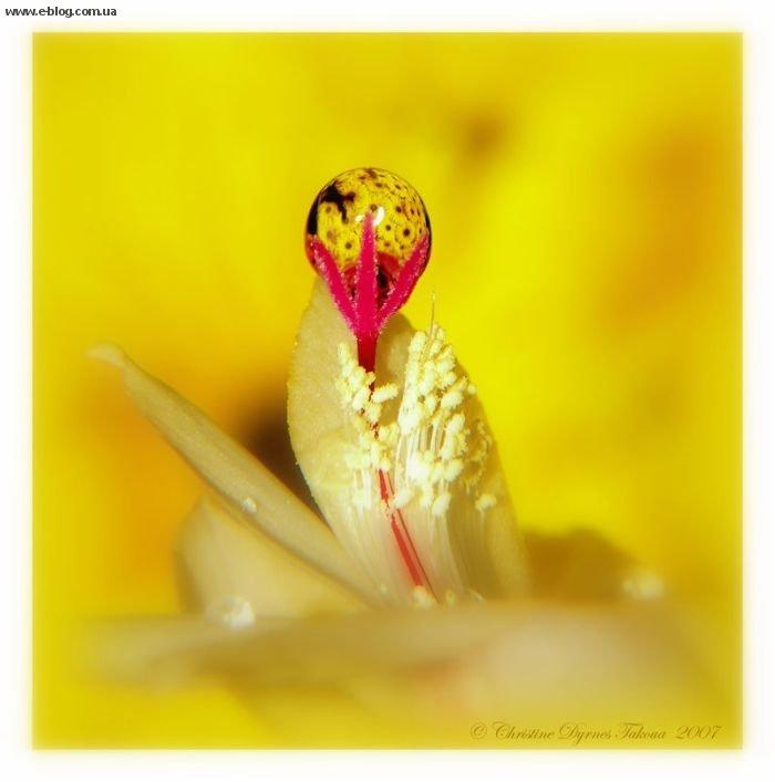 роса на цветах фото: