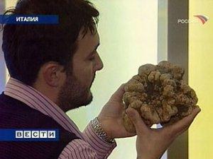 Гигантский трюфель продали за 330 тысяч долларов
