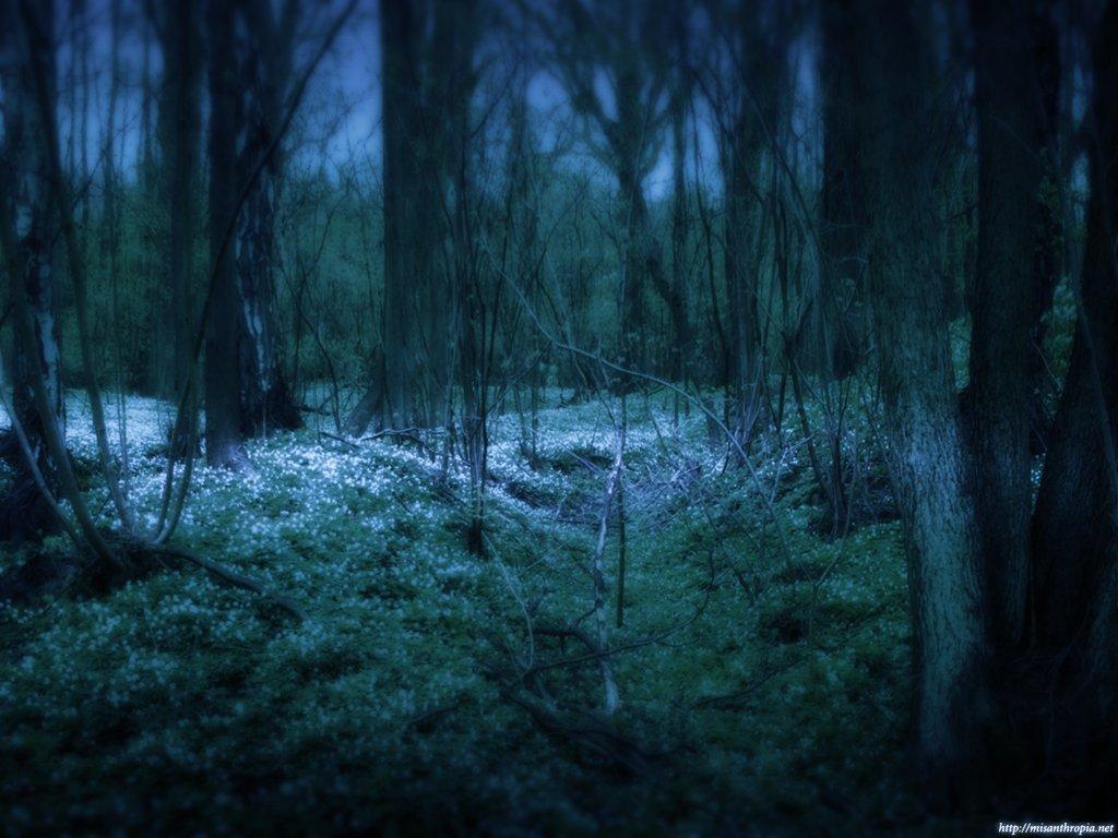 Туманный Лес 1199375455_29