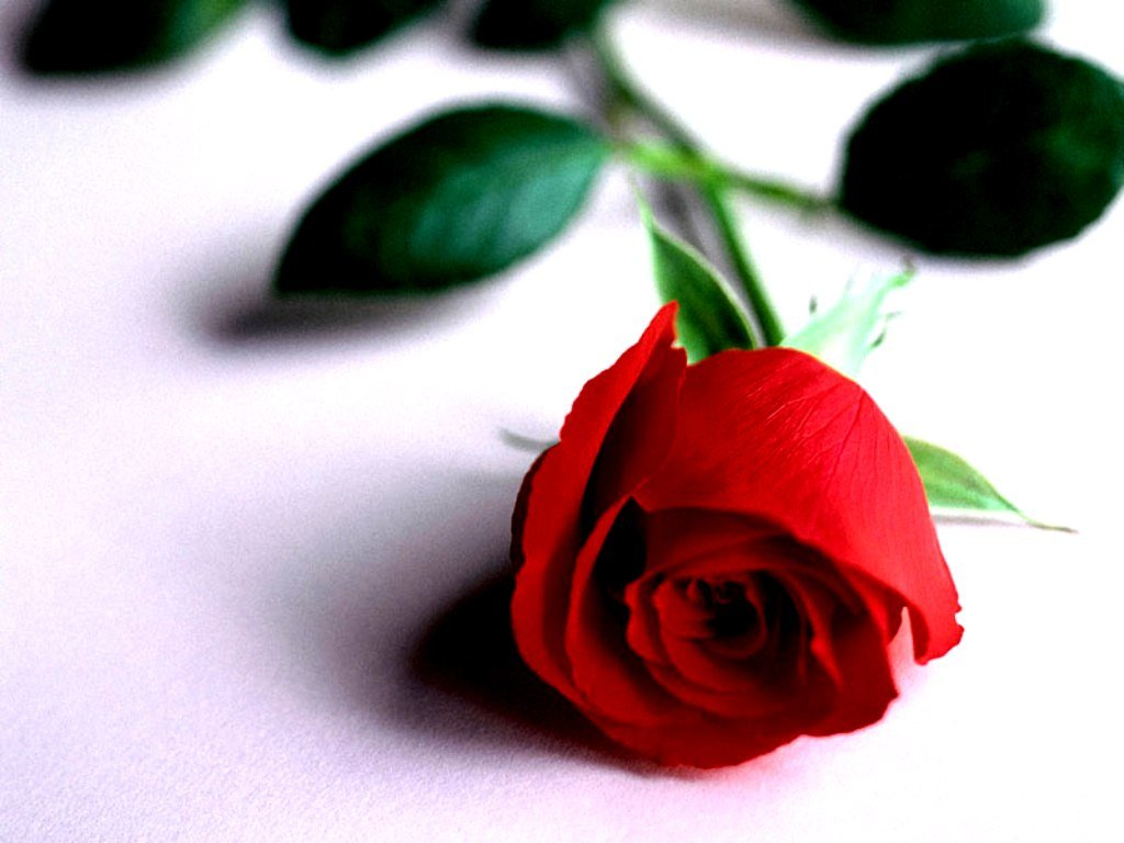Цветы картинки со стихами 3