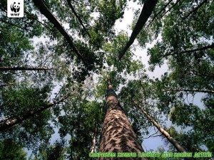 Всемирный фонд дикой природы. Подборка постеров (46 фото)