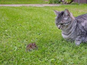 Кошки-мышки!