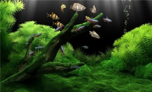 Dream Aquarium XP