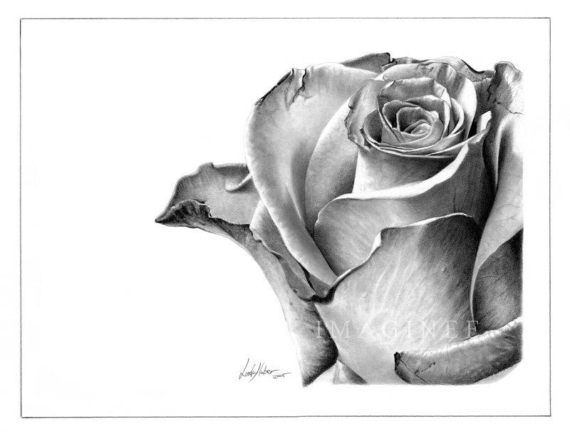Цветок карандашом картинки 8
