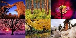 Nature Wallpapers Collection. В кадре: деревья