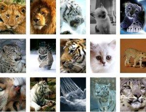 Кошки - обои для мобильника