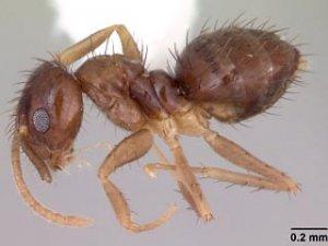 На Техас напали муравьи, пожирающие компьютеры. Под угрозой объекты NASA