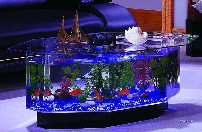 Примочки для аквариума своими руками