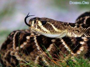 Подборка - Змеи