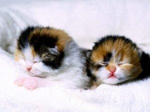Кошки, кошечки и котяры.
