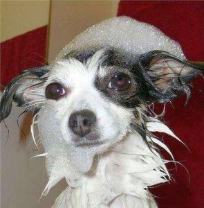 Животные в ванной :)
