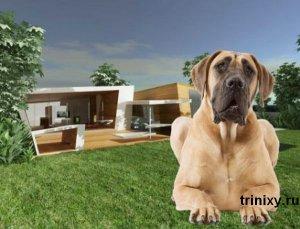 Самая дорогая собачья будка в мире (4 фото)