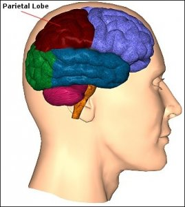 Найден участок мозга, отвечающий за одухотворенность