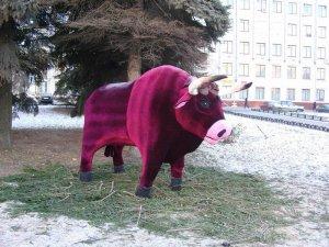 Чебоксарцы кастрировали новогоднего быка