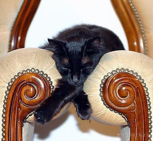 Кошки могут спать где угодно и как угодно (19 фото)