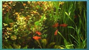 New Aquarium Real Life 23