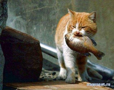 Мысли кота по поводу…