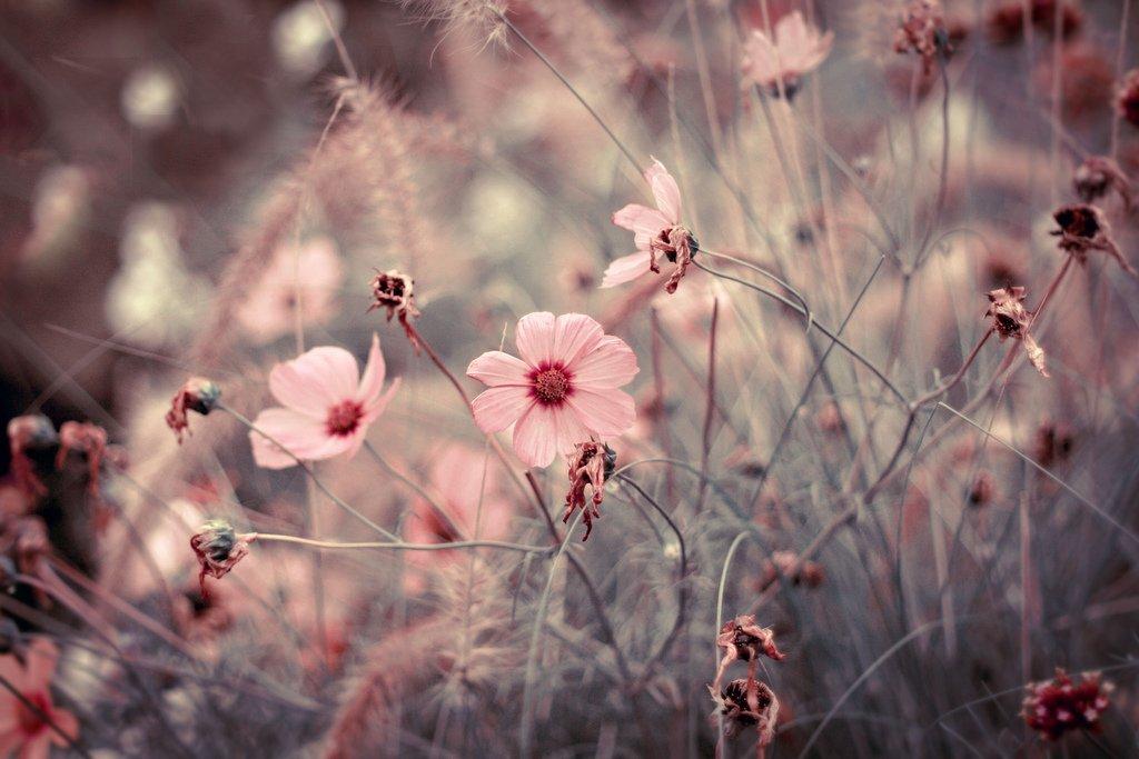 Ванильные картинки цветов 8