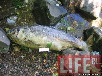 В Москве-реке обнаружены метровые тушки погибшей рыбы