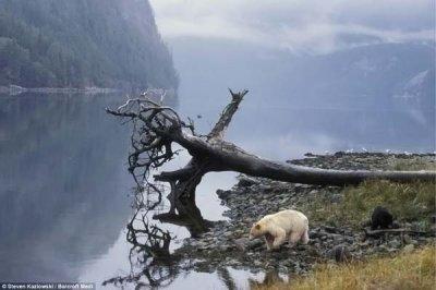Медведица - блондинка (4 фото)