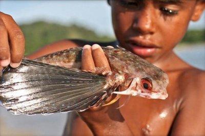 Летающая рыба (8 фото+видео)