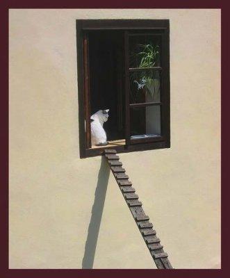 Специальные лестницы для кошек (9 фото)