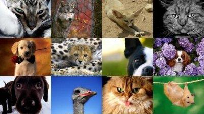 Animals Wallpaper Pack #7