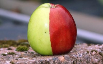 Природа подарила британцу волшебное яблоко (2 фото)