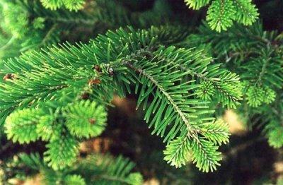 Все что нужно знать о новогодней елке