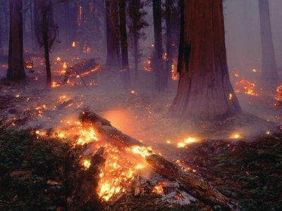 Соблюдайте правила пожарной безопасности в лесах!