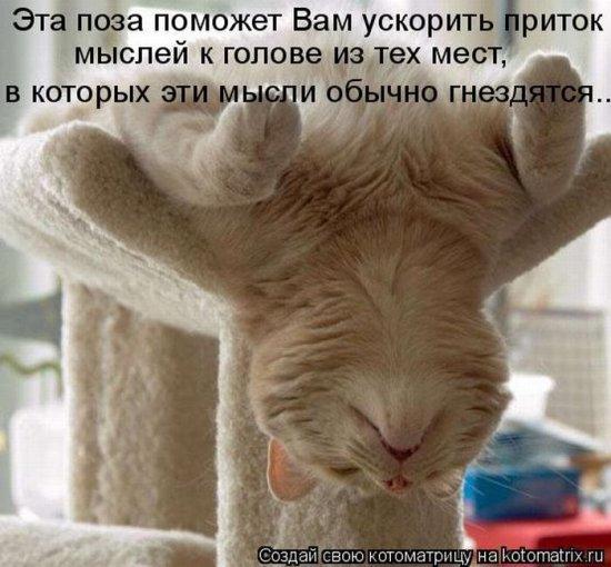 http://21region.org/uploads/posts/2010-11/1290190584_156_kotomatrix_41.jpg