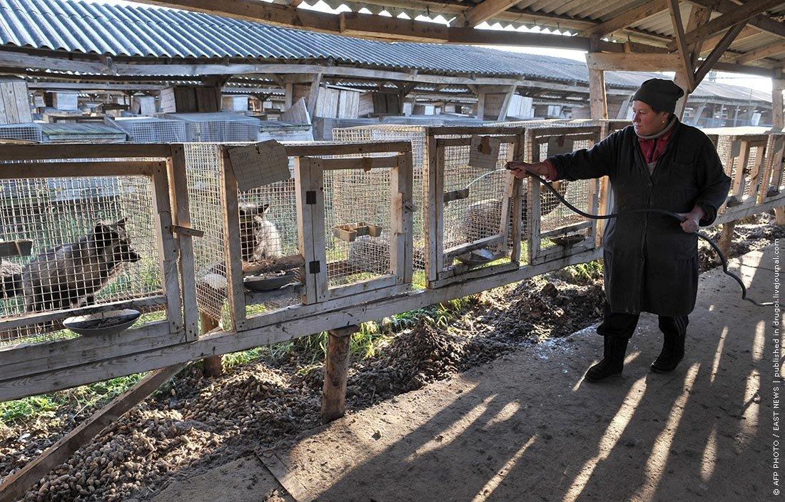 Разведение животных как бизнес в домашних условиях 240