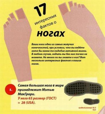 17 интересных фактов о ногах