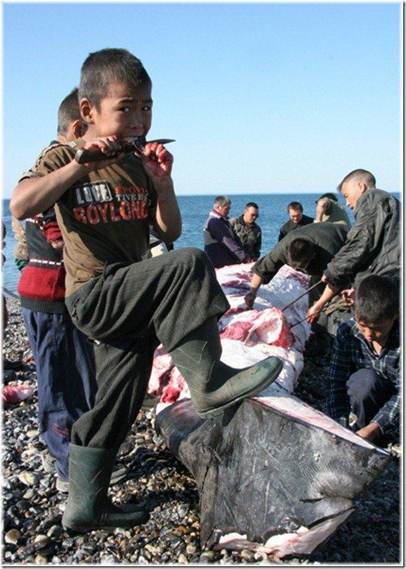 народы ловят китов