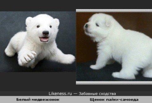 породы собак рыжих.