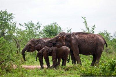 Национальный парк Удауалау, Шри-Ланка
