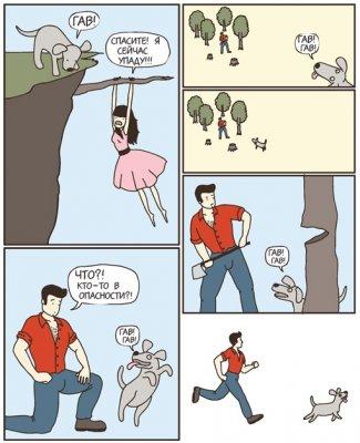 Кто лучше кошки или собаки? (3 фото)