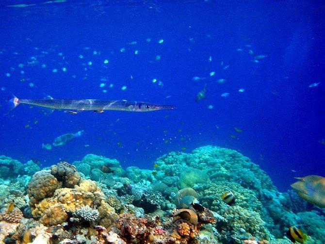 Tubular Fish Eyes Defy Evolution  The Institute for