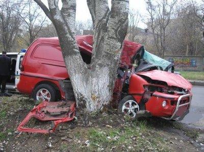 Деревья приравняют к участникам дорожного движения