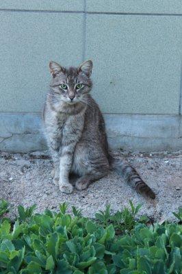 Коты улиц Чебоксар