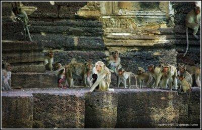 Храм обезьян в Стране Улыбок
